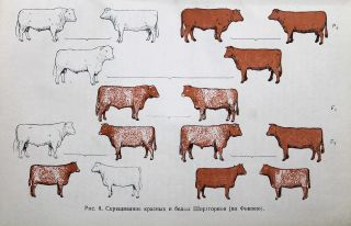 [ANIMAL GENETICS IN THE SOVIET UNION] Genetika zhivotnykh: Vvedeniye v nauku zhivotnovodstva [i.e. Animal Genetics: An Introduction to the Science of Animal Breeding]